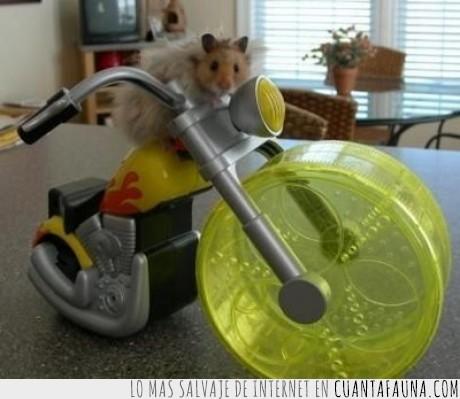 hamster,motero,moto,rueda,sons of anarchy,vehículo