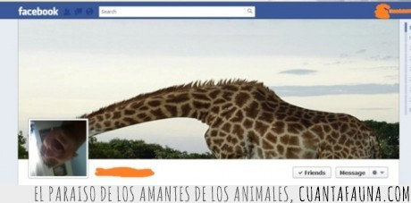 cuello,facebook,foto,jirafa,originalidad,portada,timeline
