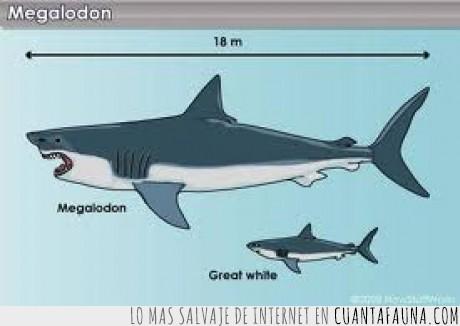 gigante,grande,megalodon,playa,temor submarino,tiburón