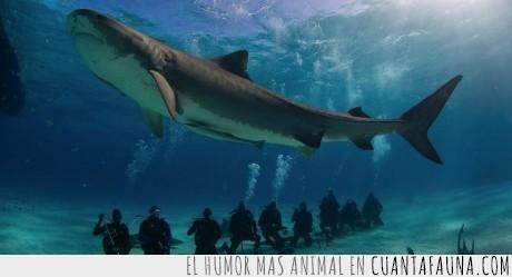 agua,alarma.pequeño,buzos,corte,herida,sangre,tiburón