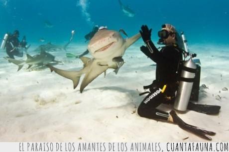 acuario,bucear,buzo,chocar esos cinco,tiburón