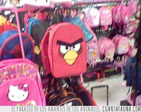 angry bird,cerdo,clase,mochila,profe,tirar
