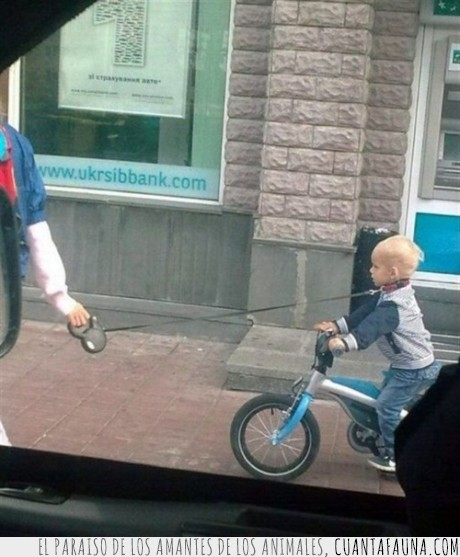 bici,correa,niño,padre del año,padres,perro