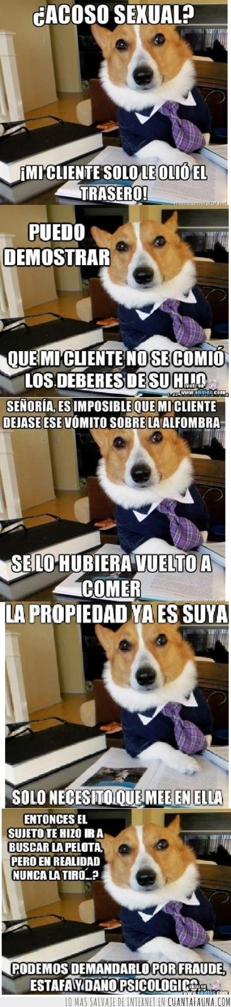 abogados,justicia,perro