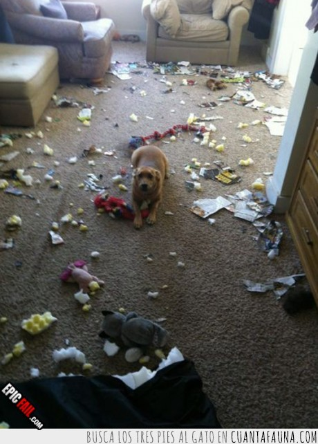 destrozar,destrozo,escombro,espuma,fail,perro,romper,sofa,sucio