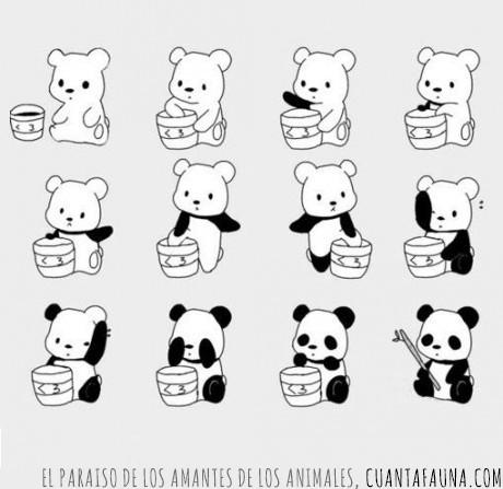 blanco,negro,oso,panda,ser