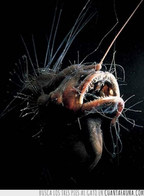 abisal,boca,mar,miedo,monstruo,peces,pez,susto