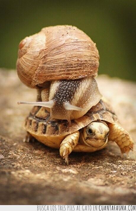 caracol,encima,locura,montar,Padre de familia,tortuga,velocidad