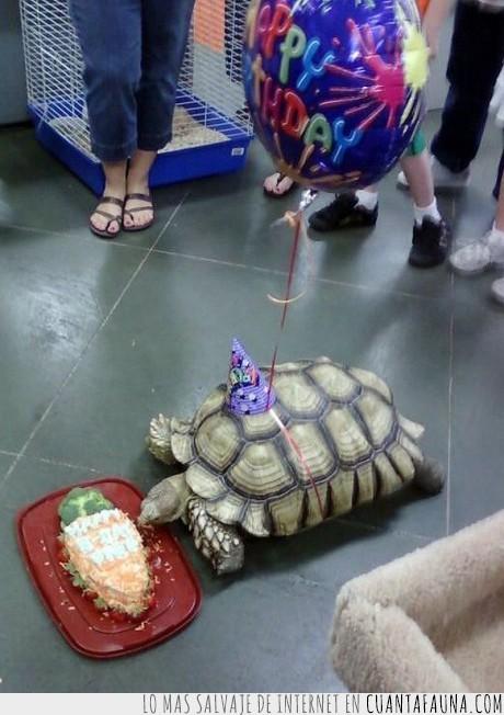 comida,cumpleaños,globo,tortuga