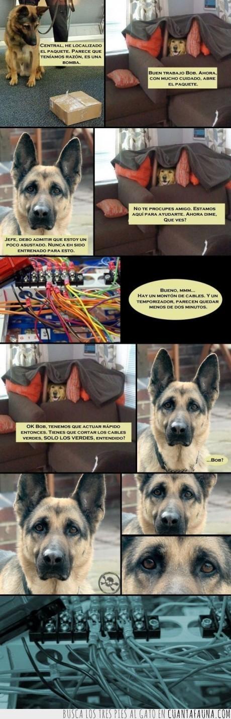 artificiero,bomba,cable,color,cortar,daltonico,esposa,explosión inminente,muerte,perro,problema