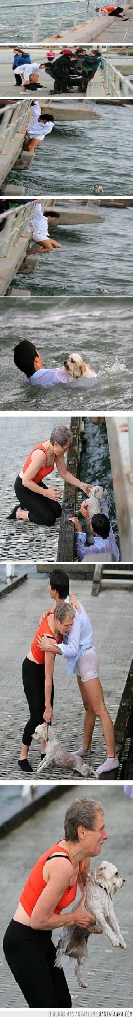 arriesgar,australia,heroe,mar,perro,rescate