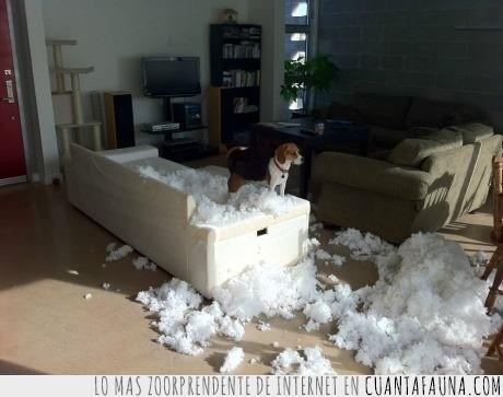 comprar,decian,destrozo,mascota,mueble,perro,sillon,sofa
