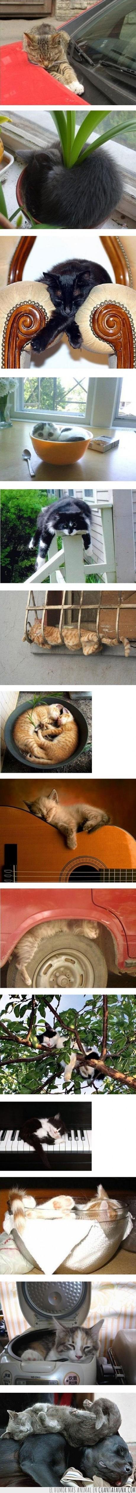 donde sea,dormir,gatos,ojala yo también