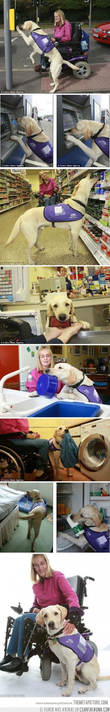 discapacitado,mejor amigo,mujer,perro