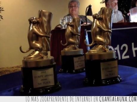 montar,perro,pierna,premios,trofeos