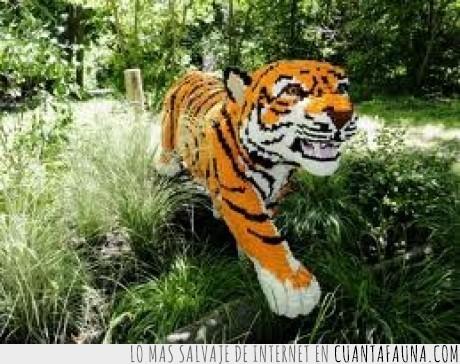 animal,lego,nueva york,tigre,zoo,zoologico