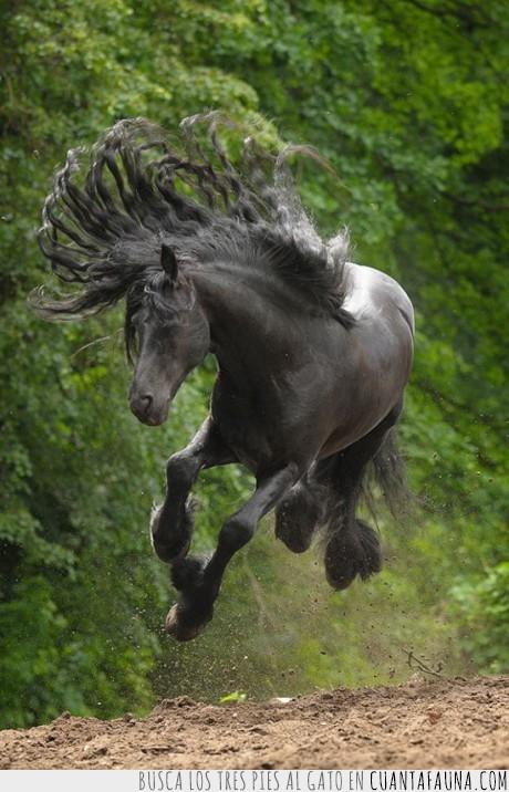 caballo,mejor que la carbonero,negro,pelazo,pelo pantene,salta