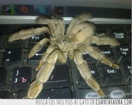araña,miedo,mierda,peluda,tarantula,teclado