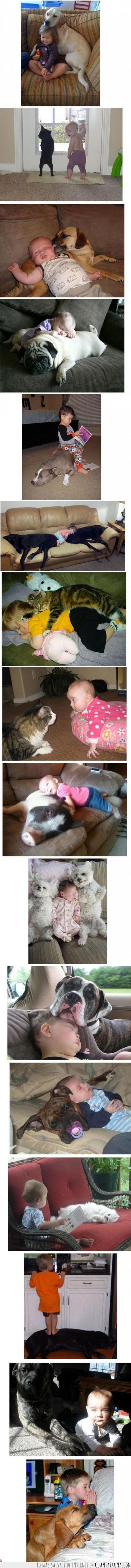 amigos,animales,bebe,gato,graciosos,niños,pequeños,perro