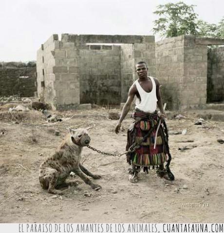 africa,hiena,mascota,pasea,venga Toby