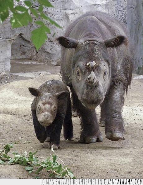 extinción,los thornberry,mi primer cartel,rinoceronte