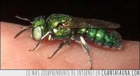 alien,avispa,esmeralda,increible,insecto,pelicula,raro
