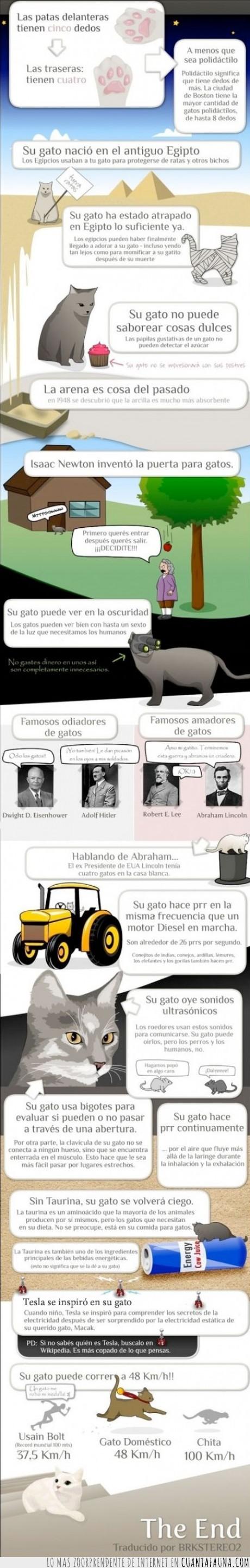 curiosos,datos,famoso,felino,gato,mundo