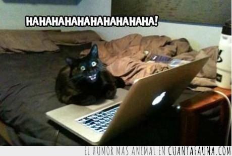 contraseña,gato,ha llegado su venganza,hahaha,maligno,risa