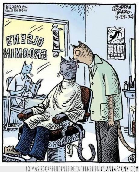 en.una,gatos,mientras,para,pelo,peluqueria,tanto