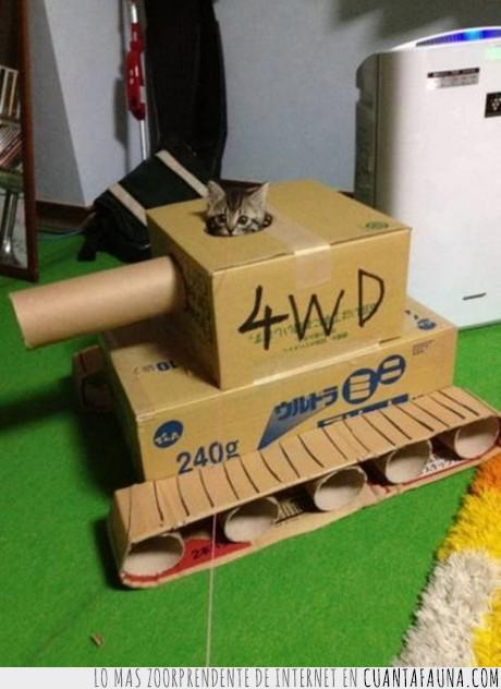 aburrimiento,carton,gato,ingenio,rollo,tanque,tierno
