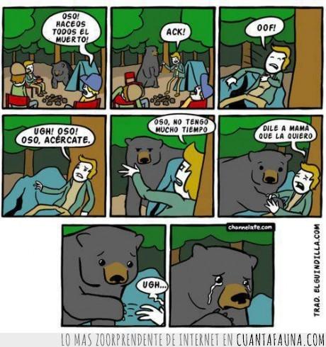 acampar,hacerse el muerto,oso
