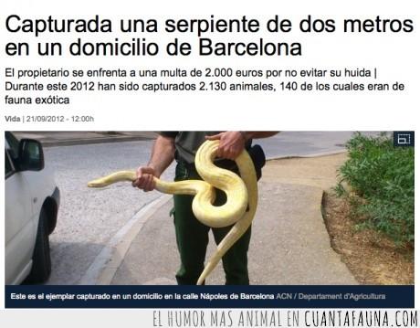 barcelona,dos metros,fauna exótica,miedo,piso,pithon,piton,serpiente
