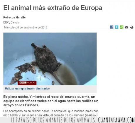 Animal raro,nadador,ornitorrinco,rata,topo