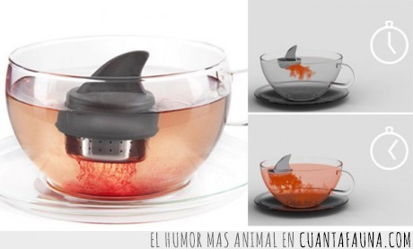 agua,frutas del bosque,infusion,rojo,sangre,te,tiburon,tiñe