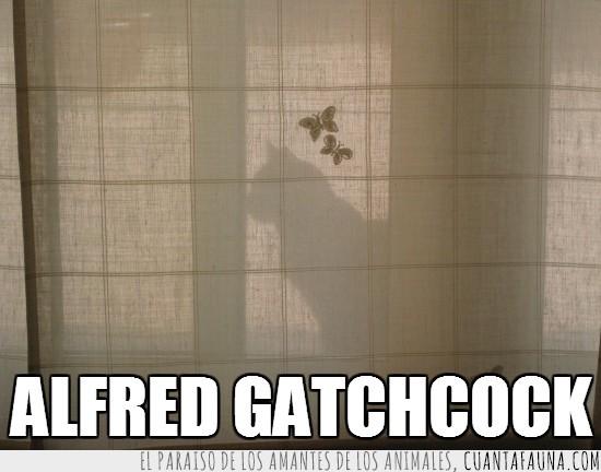 alfred hitchcock,cortina,detrás,escondido