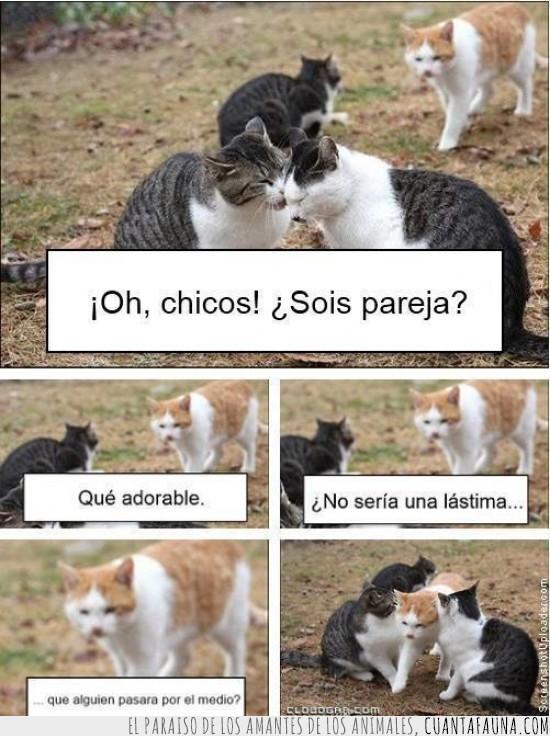 cruzarse,gato,juntos,pareja