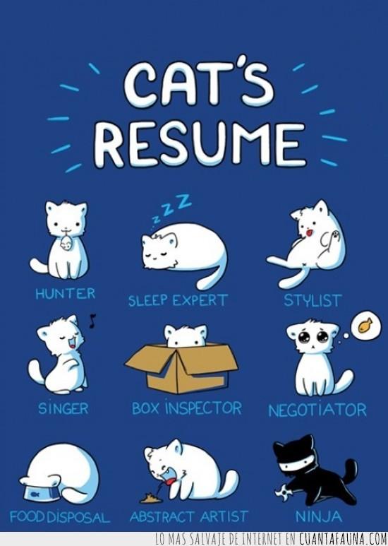 gatito,gatos,resumen,vagos,vida