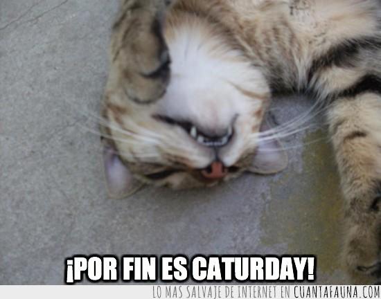 caturday,descanso,gato