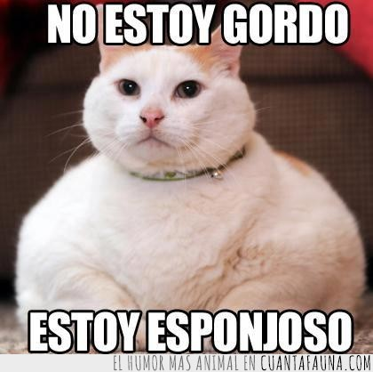esponjoso,gato,gordo