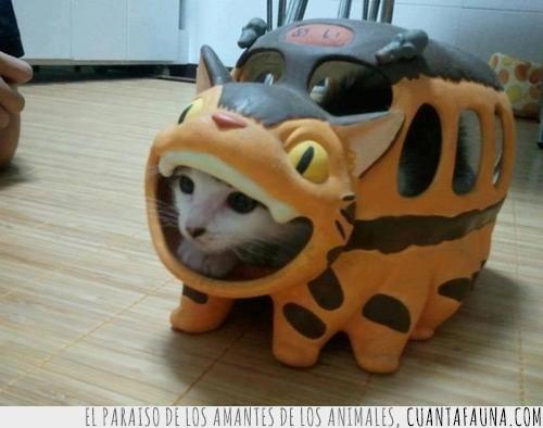 gatobús,Hayao,Miyazaki,Totoro