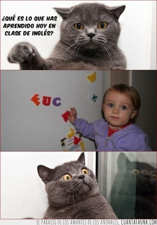 educación,escuela,Gato,niño
