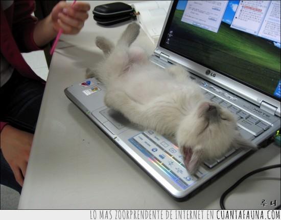 Gato,ordenador,ratón,siesta