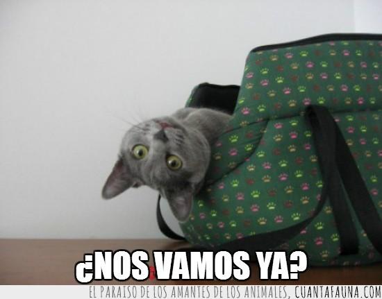 boca abajo,cesta,gato,preguntar