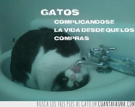 agua,beber,complicarse,gato,grifo,lol