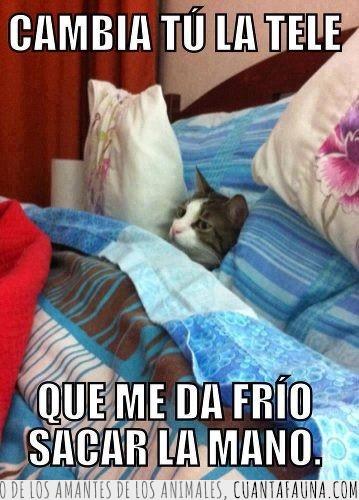 agusto,cama,frio,gato,tele