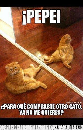 espejo,Gato,preguntarse,raro
