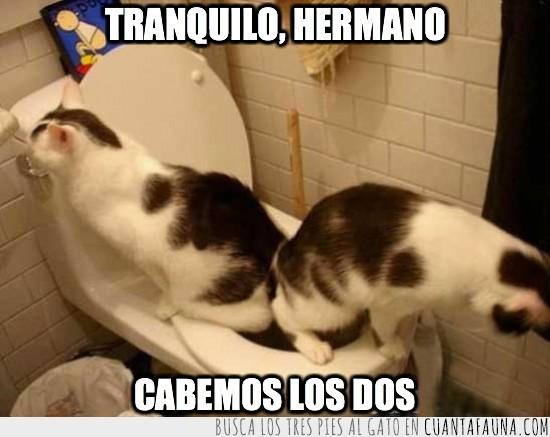 compartir,gatos,mear,retrete,wc