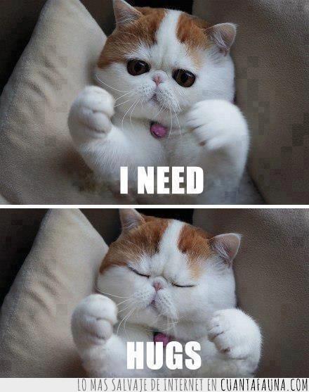 abrazo,flocoshenie,gato,ricura