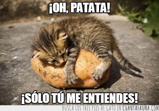 abrazar,gatito,patata