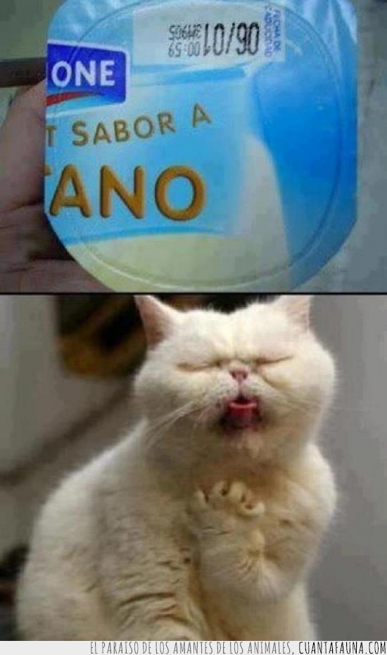 ano,danone,gato,vomitar,yogur